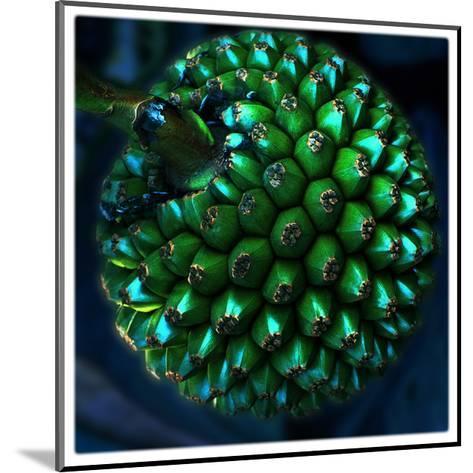 Pod of Seeds-Harold Silverman-Mounted Giclee Print