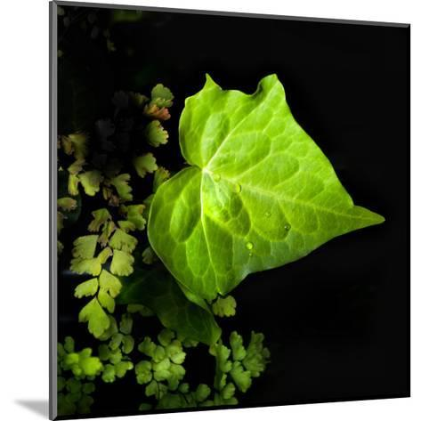 Leaf and Leaves-Harold Silverman-Mounted Giclee Print