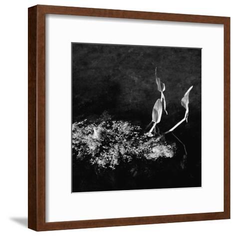 Plants and Water-Harold Silverman-Framed Art Print