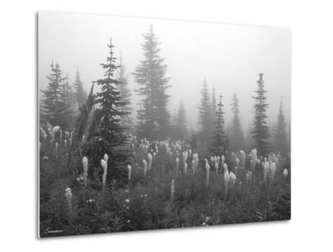 Glacier 7-Gordon Semmens-Metal Print