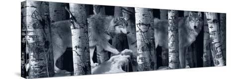 Silver Tone Moon Shadows 2-Gordon Semmens-Stretched Canvas Print