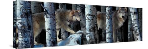 Moon Shadows 2-Gordon Semmens-Stretched Canvas Print
