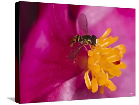 Flower and Bee-Gordon Semmens-Stretched Canvas Print
