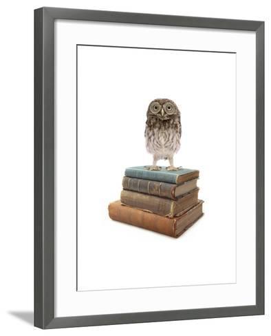 Owl and Books-J Hovenstine Studios-Framed Art Print