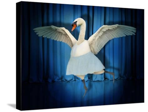 Swan Lake-J Hovenstine Studios-Stretched Canvas Print