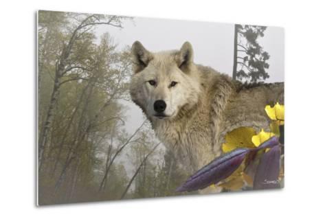 White Wolf-Gordon Semmens-Metal Print