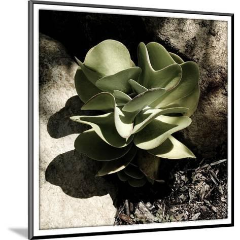 A Little Green Plant-Harold Silverman-Mounted Giclee Print