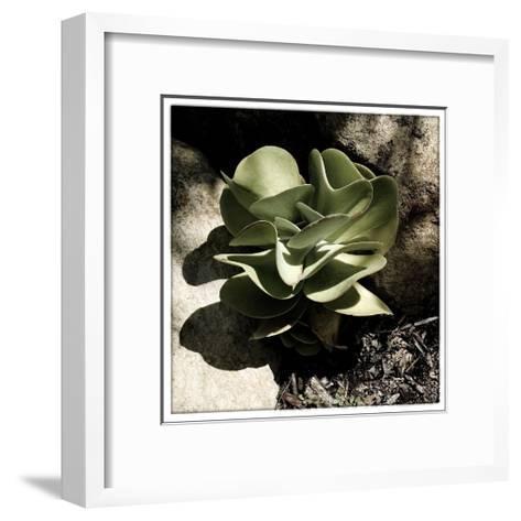 A Little Green Plant-Harold Silverman-Framed Art Print