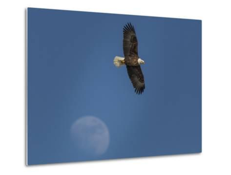 Eagle and Moon-Galloimages Online-Metal Print