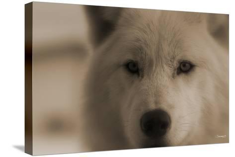 Wolf-Gordon Semmens-Stretched Canvas Print