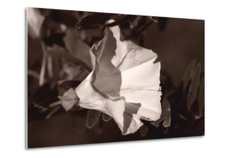 Buffalo River 9-Gordon Semmens-Metal Print