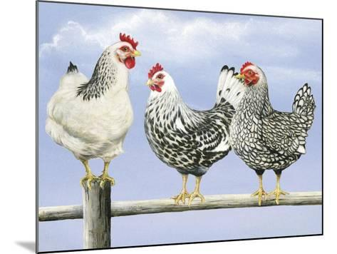 Three Black and White Hens-Janet Pidoux-Mounted Giclee Print