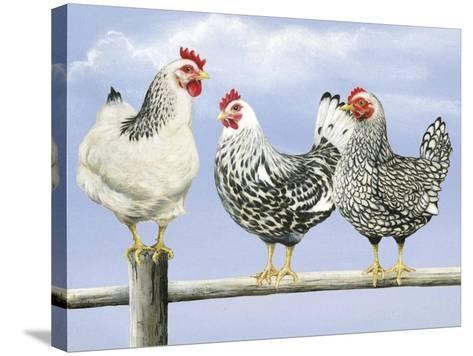 Three Black and White Hens-Janet Pidoux-Stretched Canvas Print