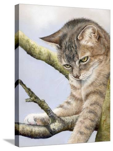 Tabby in Tree-Janet Pidoux-Stretched Canvas Print