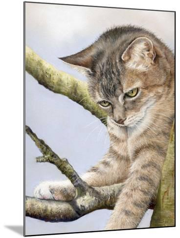 Tabby in Tree-Janet Pidoux-Mounted Giclee Print