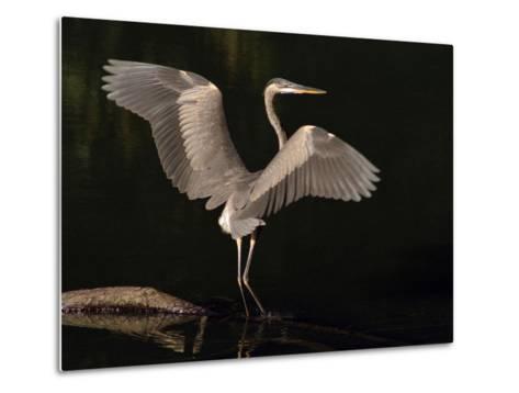 Big Bird-J.D. Mcfarlan-Metal Print