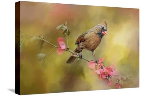 Spring Cardinal 1-Jai Johnson-Stretched Canvas Print