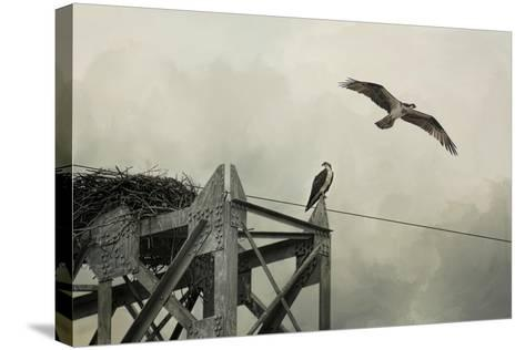 Ospreys at Pickwick-Jai Johnson-Stretched Canvas Print