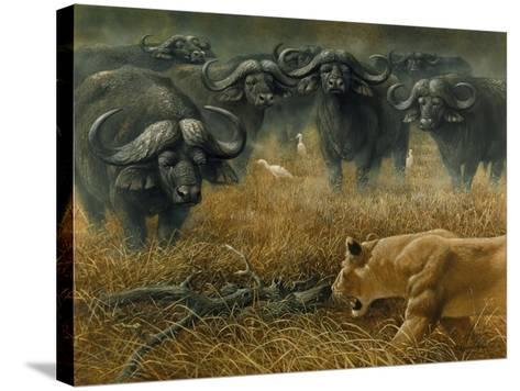 Lioness and Cape Buffalos-Harro Maass-Stretched Canvas Print