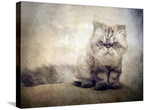 Cranky Cat-Jessica Jenney-Stretched Canvas Print