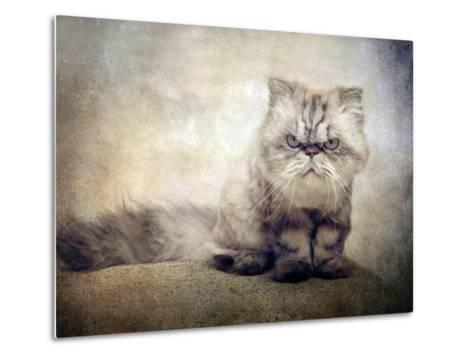 Cranky Cat-Jessica Jenney-Metal Print