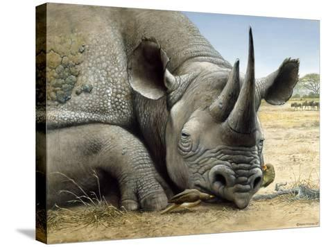 Black Rhino-Harro Maass-Stretched Canvas Print