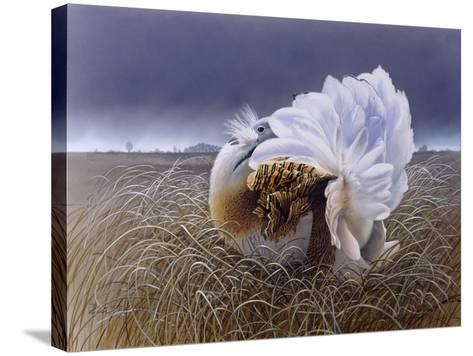 Great Bustard-Harro Maass-Stretched Canvas Print