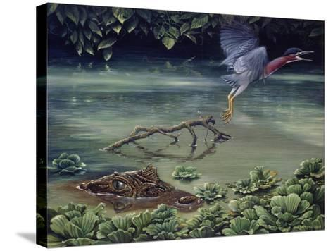 Caiman and Green-Backed Heron-Harro Maass-Stretched Canvas Print
