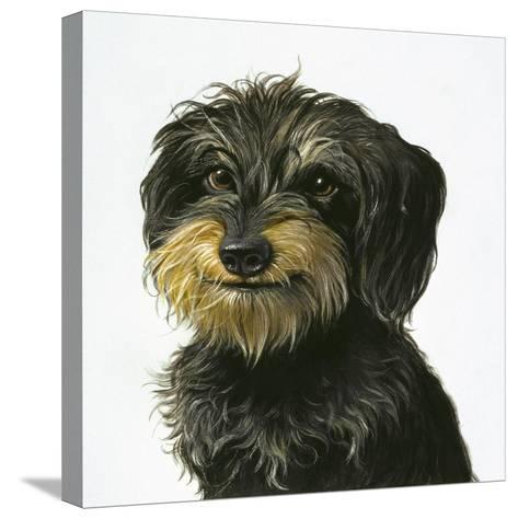 Dog-Harro Maass-Stretched Canvas Print