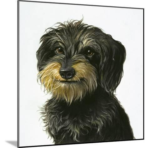 Dog-Harro Maass-Mounted Giclee Print