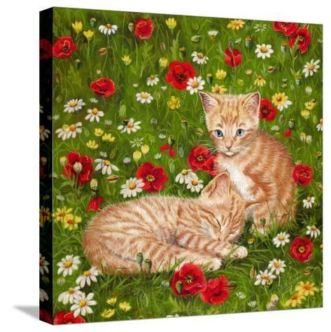 Ginger Kittens in Red Poppies-Janet Pidoux-Stretched Canvas Print
