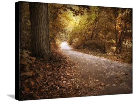 Enlightened Path-Jessica Jenney-Stretched Canvas Print