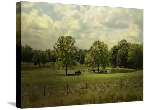 Cattle Pond in Summer-Jai Johnson-Stretched Canvas Print