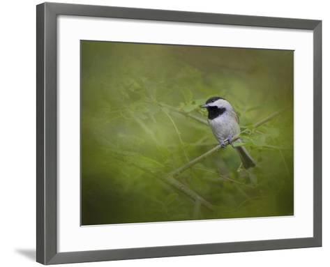 Spring Chickadee-Jai Johnson-Framed Art Print