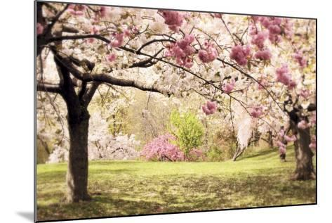 Cherry Hill Morning-Jessica Jenney-Mounted Giclee Print