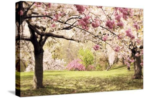 Cherry Hill Morning-Jessica Jenney-Stretched Canvas Print