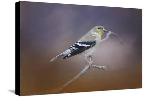 Goldfinch in the Light-Jai Johnson-Stretched Canvas Print