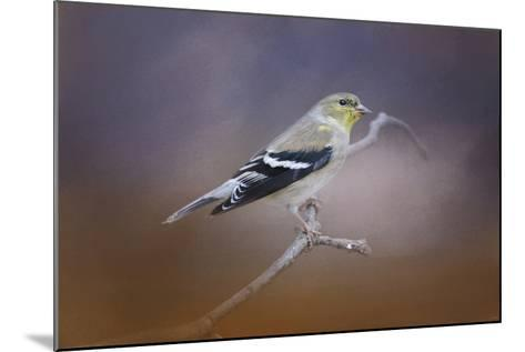 Goldfinch in the Light-Jai Johnson-Mounted Giclee Print