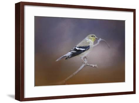 Goldfinch in the Light-Jai Johnson-Framed Art Print