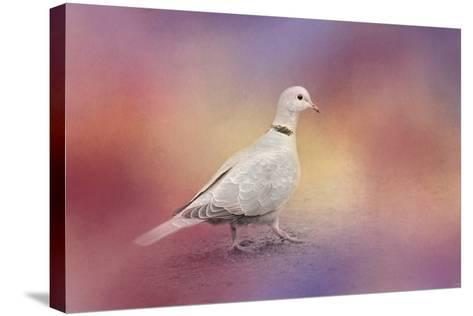 Spring Eurasian Collared Dove-Jai Johnson-Stretched Canvas Print