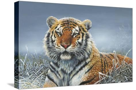 Tiger in Snow-Harro Maass-Stretched Canvas Print