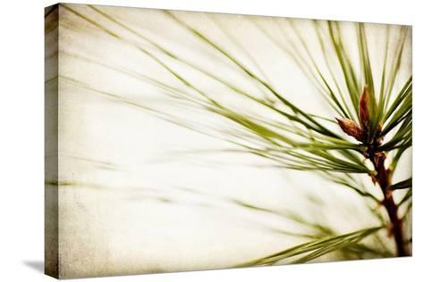 Pine Needles-Jessica Rogers-Stretched Canvas Print
