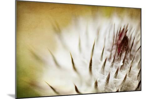 Thistle Bud-Jessica Rogers-Mounted Giclee Print