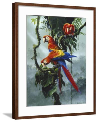 Red and Yellow Macaws-Harro Maass-Framed Art Print