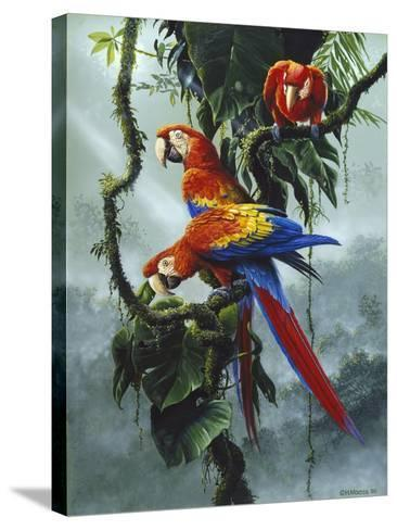 Red and Yellow Macaws-Harro Maass-Stretched Canvas Print