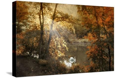 Autumn Afterglow-Jessica Jenney-Stretched Canvas Print