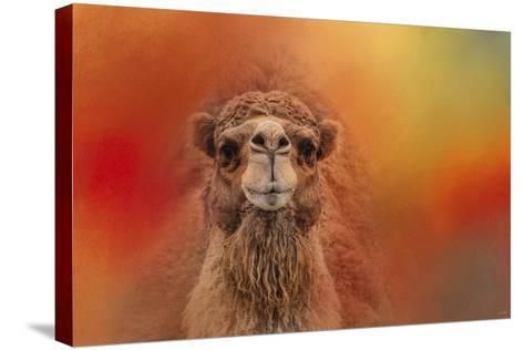 Dromedary Camel-Jai Johnson-Stretched Canvas Print