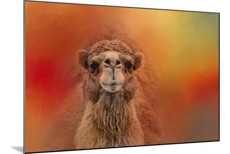 Dromedary Camel-Jai Johnson-Mounted Giclee Print