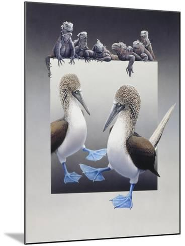 Bluefooted Boobies and Marine Iguanas-Harro Maass-Mounted Giclee Print