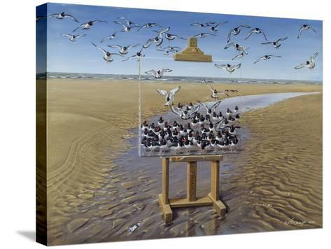 Oyster Catchers-Harro Maass-Stretched Canvas Print